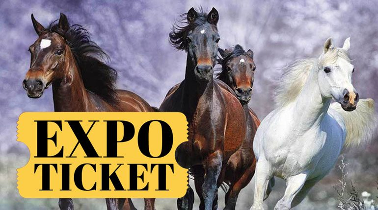 2019 Rocky Mountain Horse Expo